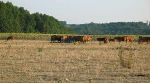 Certaines espèces prairiales résistent mieux à la sécheresse et aux fortes chaleurs que d'autres.