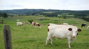 élevage et pâturage, les exploitations d'élevage économes et autonomes fondées sur le pâturage