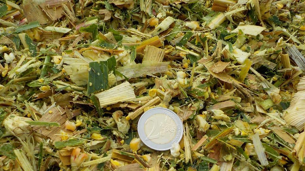 L'ensilage du maïs fourrage en brins longs