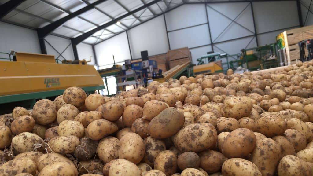 un bâtiment pour les plants de pommes de terre en cuma