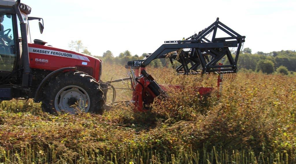 La faucheuse-andaineuse Equip'Agri en démonstration dans une parcelle de sarrasin bio.