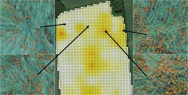 Nouveautés Agromek : Agro Intelligence trèfle