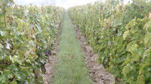 Vignes dépassement outil intercep astuces