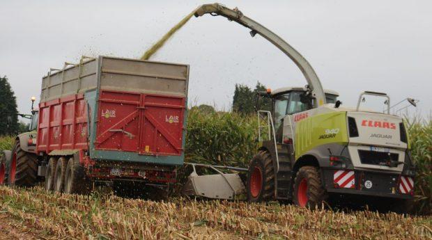 ensileuses avis Claas Jaguar 940 : en plein travail dans du maïs en Normandie