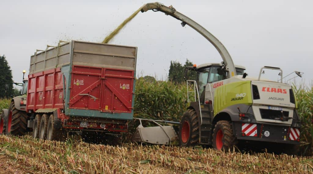 Ensileuse Claas Jaguar 940 : en plein travail dans du maïs en Normandie