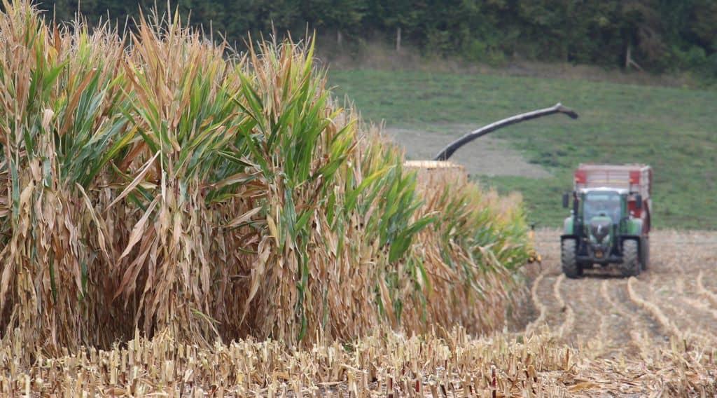défi ensileuses 2018 Elvup, données technico-économiques ensilage de maïs