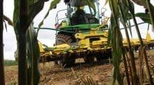 Qualité du fourrage : Ensileuse prête à mordre le maïs fourrager