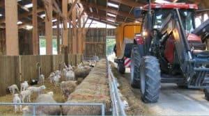 mélangeuse-distributrice, élevage ovin, gain de temps