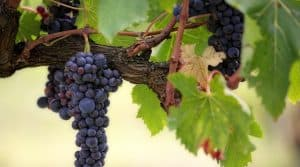 production mondiale vin rebond 2018
