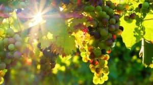 Vignoble portugais Douro exposition Bordeaux
