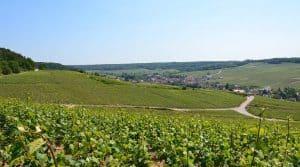 champagne taxes vignobles renoncent vendre bouteilles