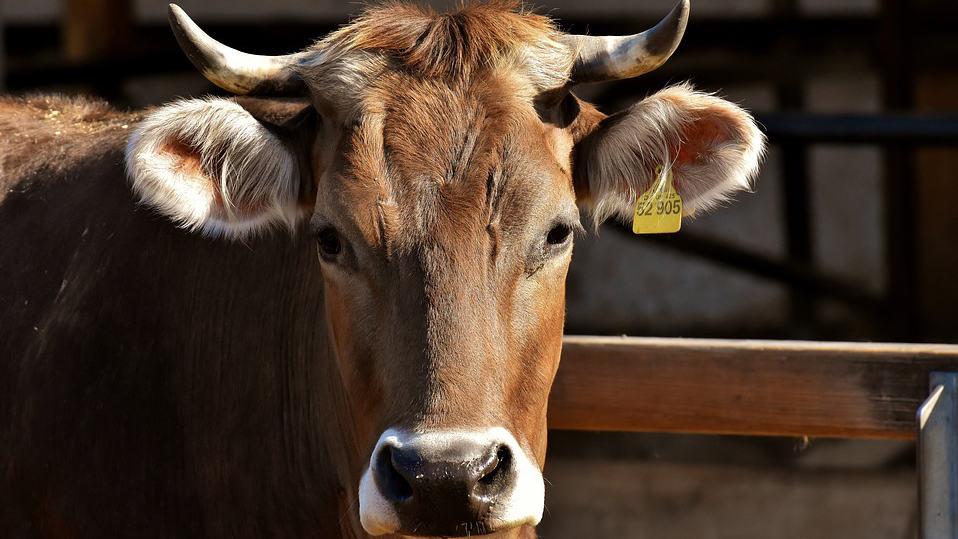 ecornage pratique proteger animaux eleveurs
