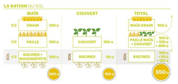 couverture végétale maïs et ration du sol