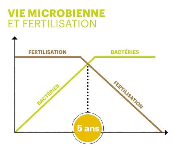 couverture végétale maïs et vie microbienne