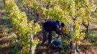 senat exonerations salaries agricoles