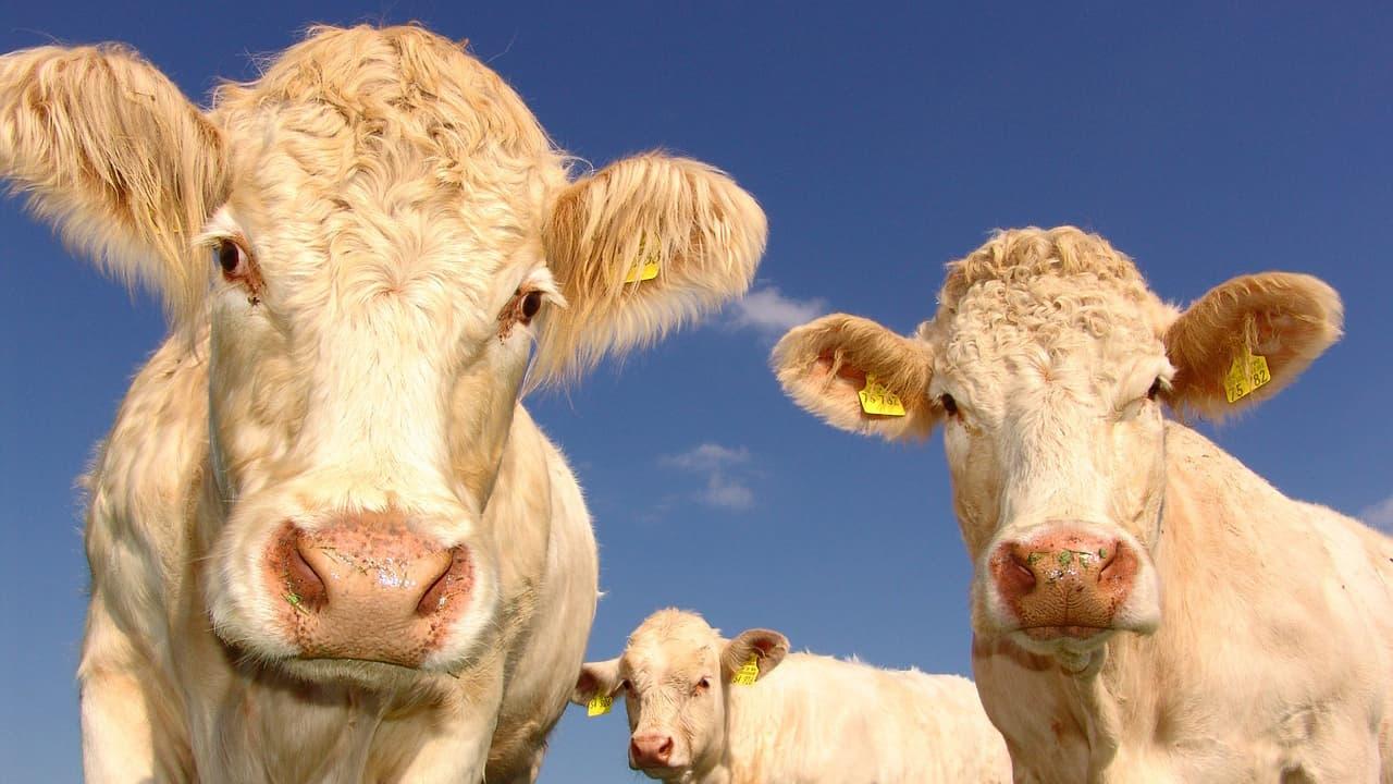 avenir reduction alimentation viande gaspillage consommation population