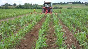 Désherbage mécanique du maïs, cinq modalités testées