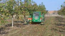 Recolte de noix : un vibreur et une ramasseuse utilisés en inter-cuma.