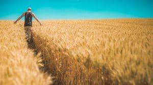 agriculture nombre moins jeunes diminution agriculture