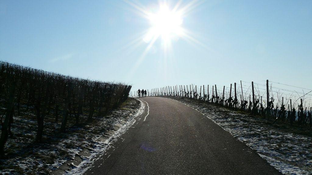 trois cuma viticoles anti-gel, Indre-et-Loire