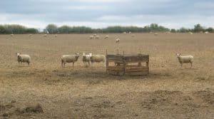 Impact économique de la sécheresse 2018 en élevage Dans le grand Est, l'EBE des systèmes d'élevage spécialisés a baissé en 2018 par rapport en 2017, du fait notamment des surcoûts alimentaires liés à la sécheresse.