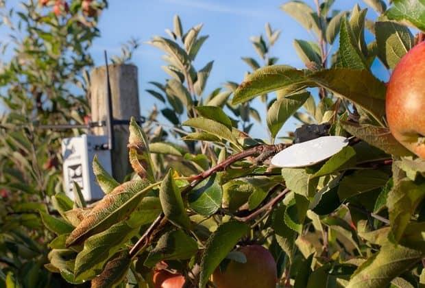 Leafcrop Sencrop