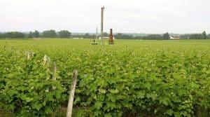 tour antigel gel viticulture