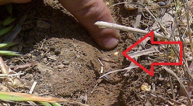 guide semis direct mise en terre