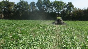 Couverts végétaux et semis direct, rotation