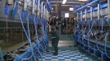 départ d'un associé de gaec, production lait, salarié