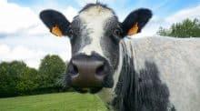 vache imminence salon agriculture 2019 egerie