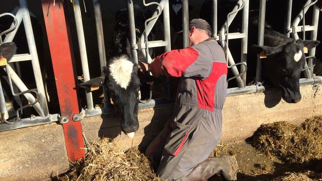 charge de travail en production laitière, enquête Chambre d'agriculture de Mayenne