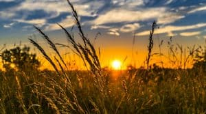 prairie moins elevage intensif avenir europe 2050 nourrir population