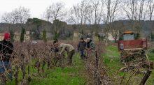 chantier de solidarité dans les vignobles audois, la cuma la Meusnoise