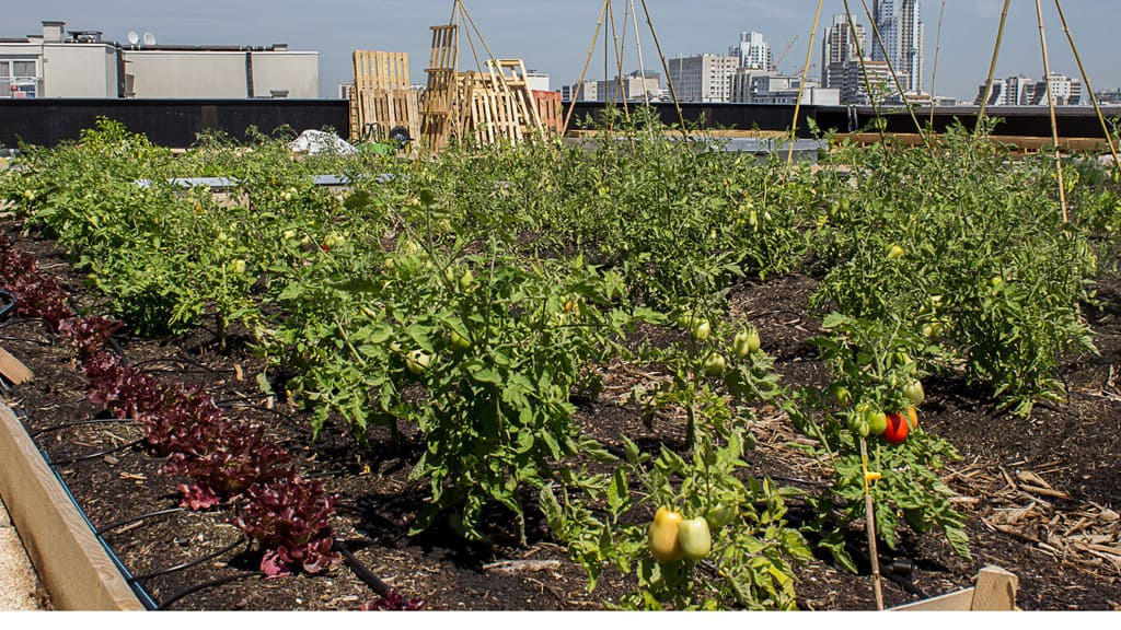 48h agriculture urbaine ateliers potagers
