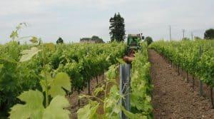 Karnott à St Emilion : Cuma, Châteaux, entreprises et viticulteurs individuels ont des besoins distincts concernant les boîtiers de suivi d'activité.