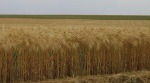 agriculture et réchauffement climatique stockage du carbone