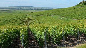 vignoble champagne Marne