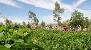 sécutité alimentaire et agro-écologie