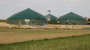 Les cive sont un des traits d'union entre la méthanisation et le sol agricole.