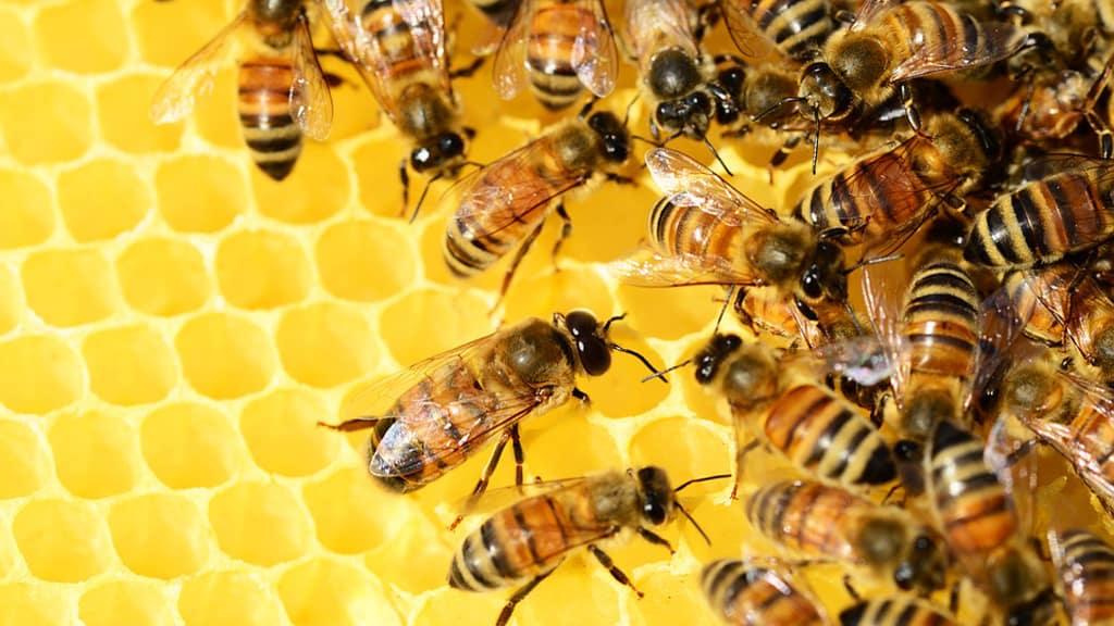 ruche abeille production miel