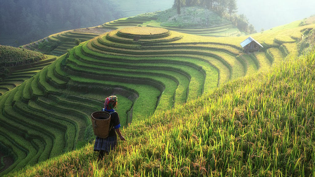 agriculture chine agricole fao