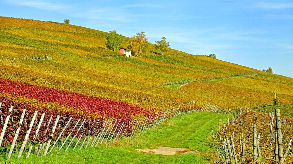 filiere viticole adapter nouveaux modes consommations