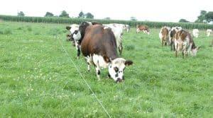 A son meilleur stade, l'herbe correspond à 1 UFL/kg de MS. Le logiciel Paturnet est conçu pour enregistrer facilement les données du pâturage de manière à éclairer les choix de l'éleveur.
