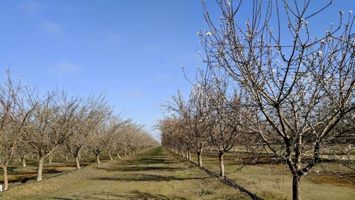 drome intelligence arbre service production fruitiere