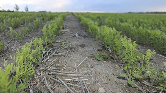 couverts vegetaux objectif principalstructure du sol gestion nutriments lutte contre adventice