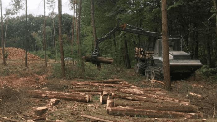 coupe bois foret française scolyte catastrophe