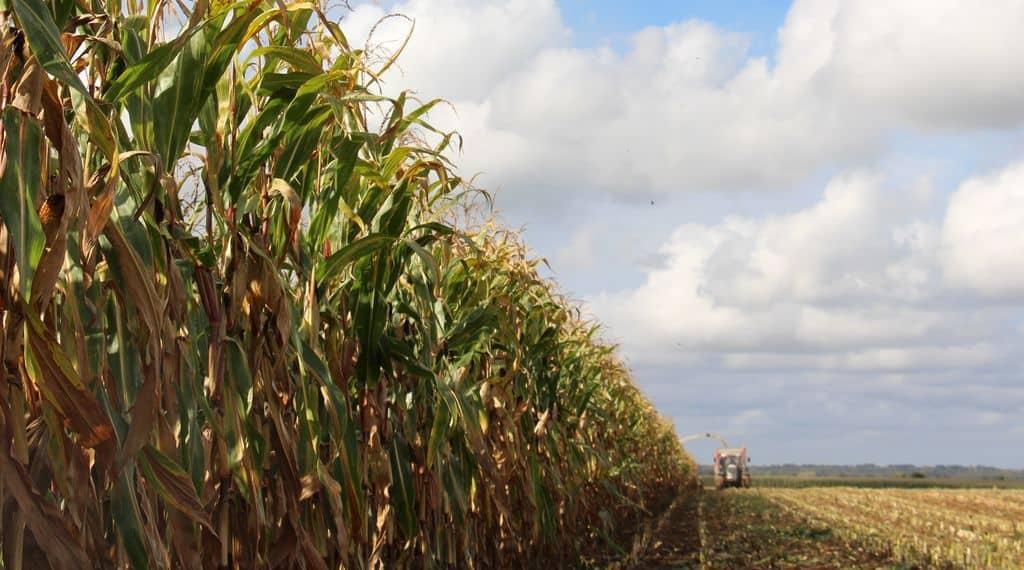 Lubrizol : les chantiers de récolte fourragère on repris leur cours