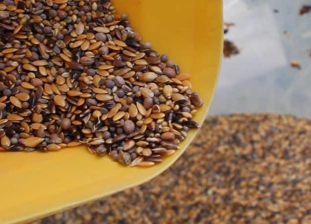 semis de couverts végétaux par drone semence