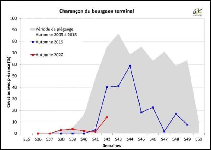 Colza et charançons : Captures pluriannuelles de charançons du bourgeon terminal en région Centre-Val de Loire (réseau BSV)